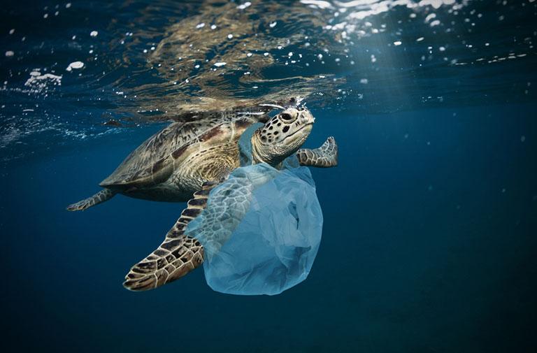 """""""disposal bags"""""""